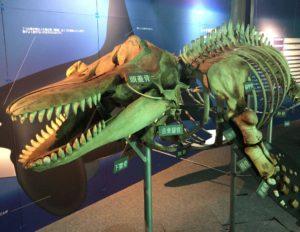 化石の恐竜